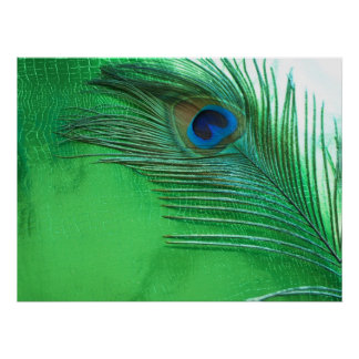 Green and White Peacock Feather Still Life Poster