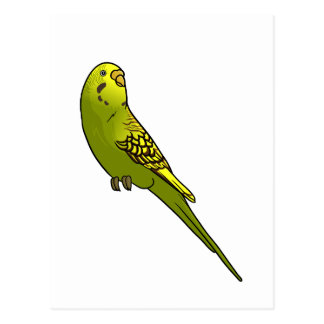 Green and yellow budgie postcard