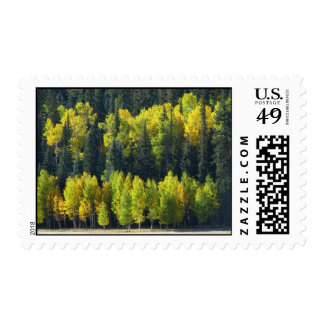 Green and Yellow Stamps