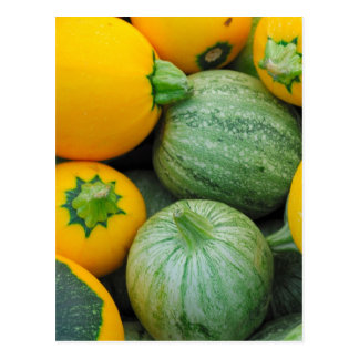 Green And Yellow Squash Postcard