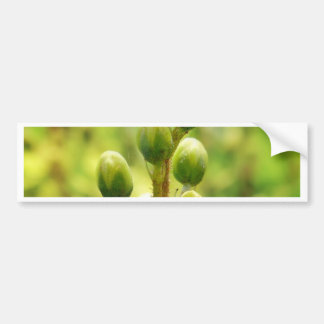 Green and Yellows Bumper Sticker