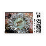 Green Anemone Postage Stamps