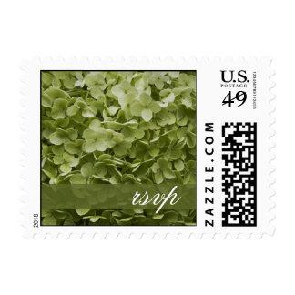 Green Annabelle Hydrangea Floral Wedding RSVP Postage