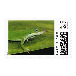 Green Anole, Anolis carolinensis, adult on palm Postage Stamp