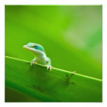 Green Anole Lizard Encounter Art Photography Photographic Print