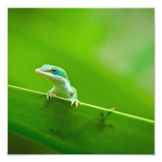 Green Anole Lizard Encounter Art Photography Photo Print