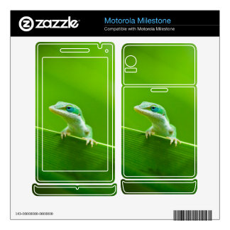 Green Anole Lizard Encounter Cute and Original Motorola Milestone Decals