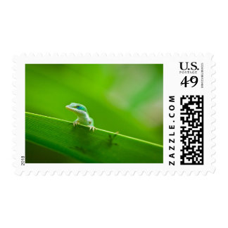 Green Anole Lizard Encounter in Jungle Postage Stamps