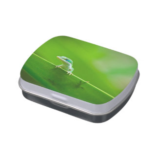 Green Anole Lizard Encounter Jelly Belly Candy Tin