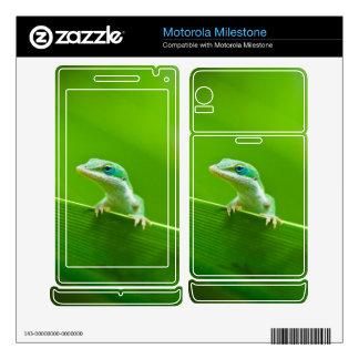 Green Anole Lizard Encounter Very Cute Motorola Milestone Decals
