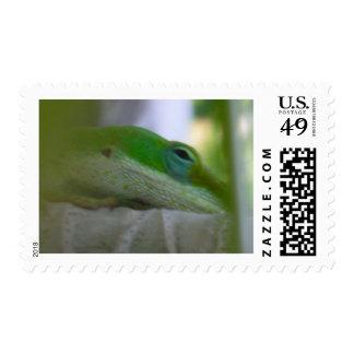 Green Anole Lizard Stamp