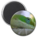 Green Anole Lizard Refrigerator Magnet