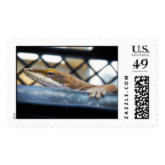 Green Anole Lizard Sunning Postage Stamp
