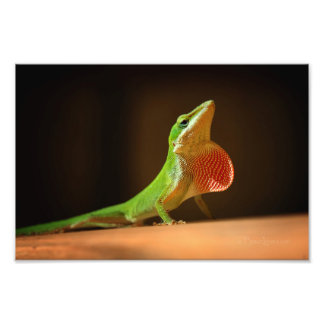 Green Anole Lizard with Red Thraot Photo Print