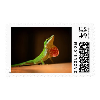 Green Anole Lizard with Red Thraot Stamps