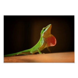 Green Anole Lizard with Red Thraot Poster