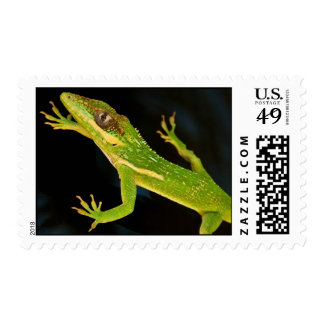 Green Anole Postage Stamps