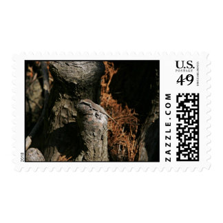 Green anole postage stamp
