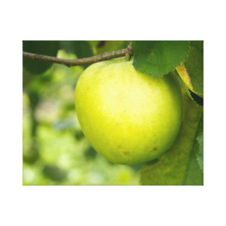 Green Apple on a Tree Branch Canvas Print