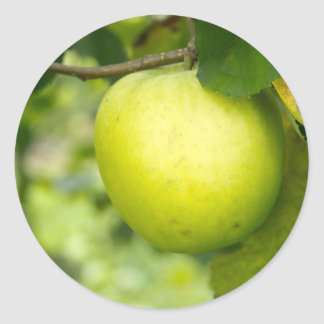 Green Apple on a Tree Branch Classic Round Sticker