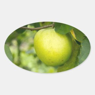 Green Apple on a Tree Branch Oval Sticker