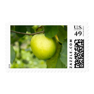 Green Apple on a Tree Branch Postage