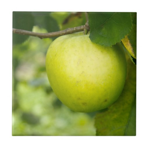 Green Apple on a Tree Branch Tile