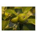 green apples card