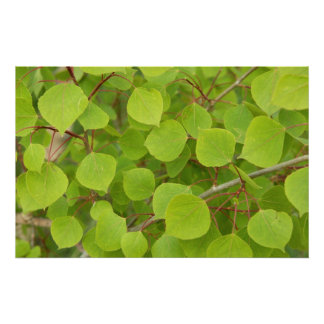 green aspen leaves poster