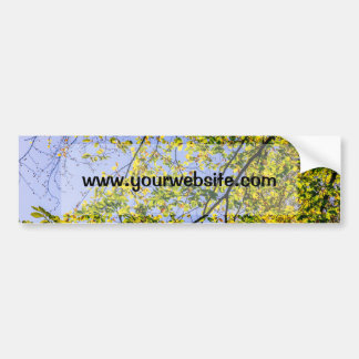 Green Autumn Leaves And A Blue Sky Bumper Sticker