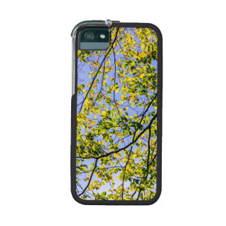 Green Autumn Leaves And A Blue Sky Cover For iPhone 5/5S