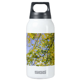 Green Autumn Leaves And A Blue Sky Thermos Water Bottle