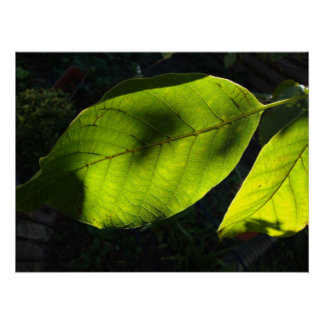 green autumnsun leafes poster