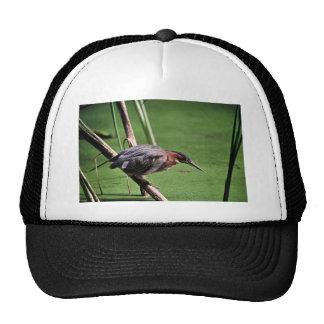 Green-backed Heron Trucker Hat