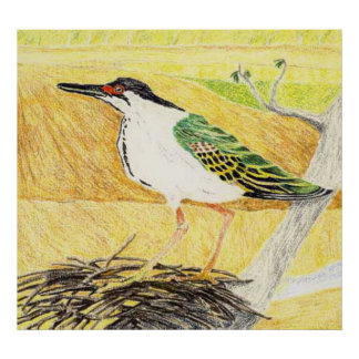 Green Backed Heron Subspecies Poster