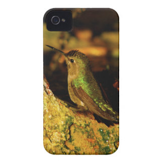 Green Backed Hummingbird iPhone 4 Cover