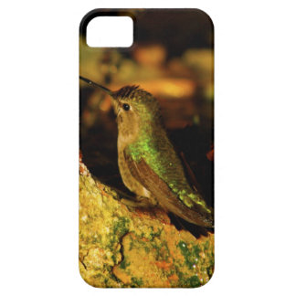 Green Backed Hummingbird iPhone 5 Cover