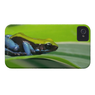 Green-backed mantella iPhone 4 Case-Mate case