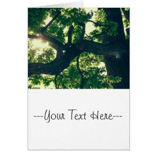 Green Backlit Tree, Sunlight Flora Card