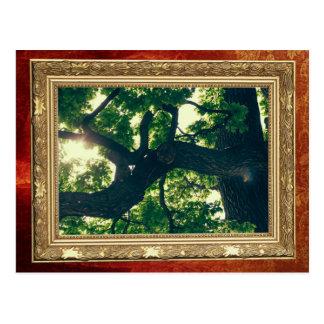 Green Backlit Tree, Sunlight Flora Postcard