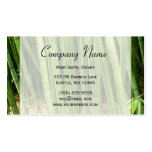 Green Bamboo Asian Double-Sided Standard Business Cards (Pack Of 100)