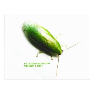 Green Banana Cockroach - Panchlora nivea Postcard
