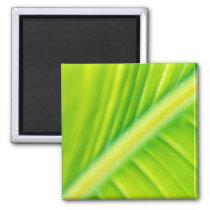 green banana leaf magnet