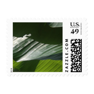 Green Banana Leaves with Shadows, Photo Detail V10 Postage