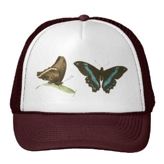 Green-banded Swallowtail Butterfly Hats