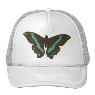 Green-banded Swallowtail Butterfly Hat