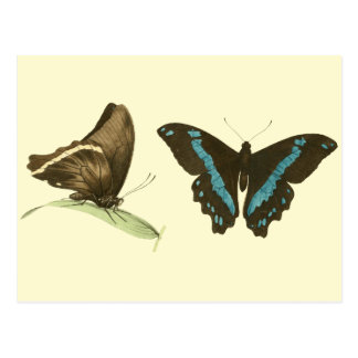 Green-banded Swallowtail Butterfly, Postcard