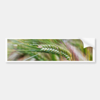 Green Barley Bumper Sticker