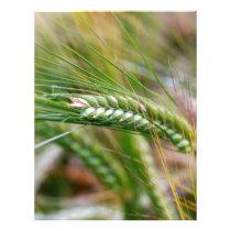 Green Barley Letterhead