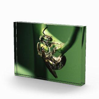 green bee award